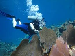 North Dakota snorkeling images Cozumel coral reef private scuba diving mexico top tips before jpg