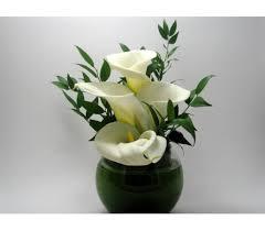white calla delicate calla w496 in san francisco ca fillmore florist