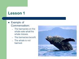 ecosystems and change chapter 6 ppt download