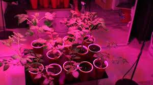 my indoor container garden grown by 90 watt led ufo grow light