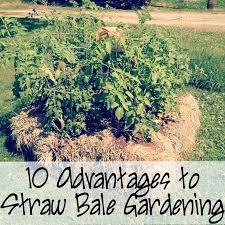 Gardening Pictures Best 25 Straw Bale Gardening Ideas On Pinterest Hay Bale
