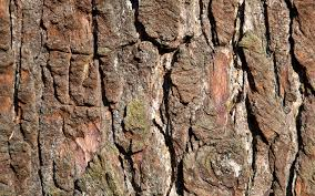 brown tree brown tree bark desktop background 1440x900 pixels