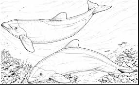 magnificent bottlenose dolphin coloring pages with dolphin