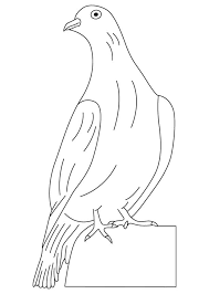 white winged dove coloring page download free white winged dove