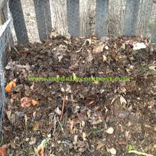 how to compost my daily compost