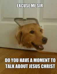 Dodg Meme - funny dog memes i top 50 of all time i world wide interweb