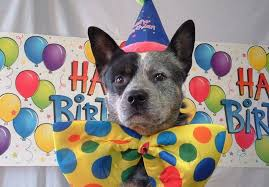 dog birthday party dog birthday party ideas how to create unforgettable celebration