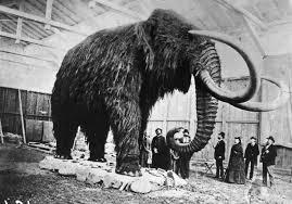 die besten 25 wooly mammoth clone ideen auf fossilien