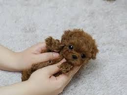 animali da cortile in regalo annunci perugia umbria di animali da cortile in regalo cuccioli