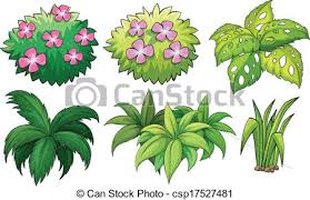 vector of six ornamental plants illustration of the six