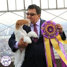 who won the dog show on thanksgiving westminster kennel club dog show home facebook