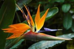 Tropical House Plants Names - tropical house plants pictures