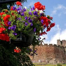 easy to use hanging baskets with a self watering system