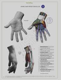 Human Anatomy Textbook Pdf 985 Best Drawing Images On Pinterest Anatomy Art Tutorials And Draw