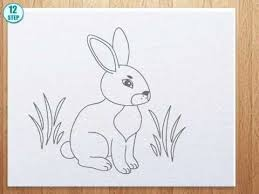 draw bunny