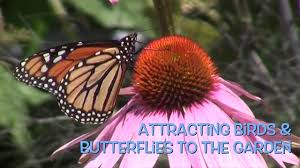 attracting birds and butterflies to the garden youtube