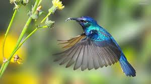 wallpaper blue hummingbird 1920 x 1080 animals pets puppies