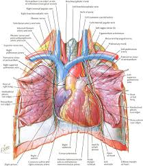 Anatomy And Physiology Human Body Best 25 Diagram Of The Heart Ideas Only On Pinterest Heart