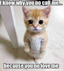 Why You No Call Me Meme - damn kitten quotes pinterest meme and generators