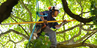 what you need to about a tree company before hiring them
