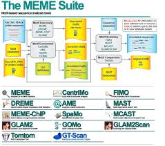 Meme Suite - meme使用说明 bluesky s blog