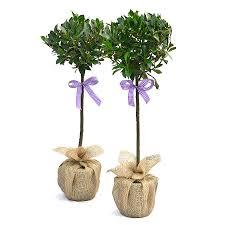 christmas plants gifts christmas gift ideas