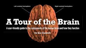 Role Of Brain Stem Large Jpg