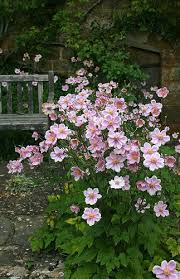 broughton castle gardens gardens and plants