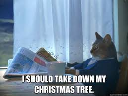 i should take down my christmas tree the one percent cat