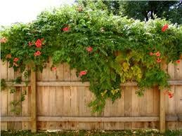 Ebay Vertical Garden - garden design garden design with artificial vines home uamp