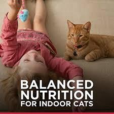 science diet indoor cat savory chicken entree minced cat