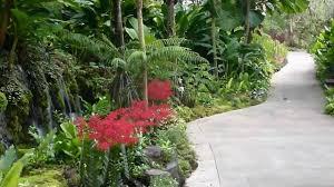 Botanical Gardens In Singapore by Singapore Botanic Gardens Hd Experience Youtube