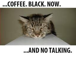 Talking Cat Meme - 25 best memes about grumpy cat grumpy cat memes