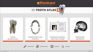 human dental anatomy choice image learn human anatomy image
