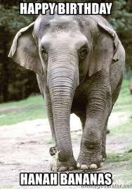 Elephant Meme - birthday elephant meme best elephant 2018