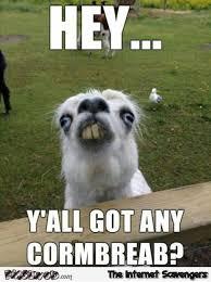 Funny Redneck Memes - funny redneck alpaca meme pmslweb