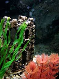 how to clean aquarium ornaments pets