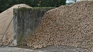 pomme de si e social pommes de terre pour l alimentation des bovins et des vaches laitières