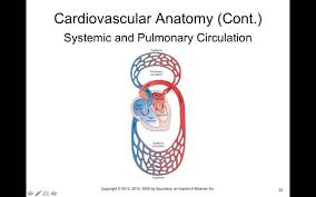 Heart Anatomy And Function Chapter 17 Cardiac Function Biol300 Youtube