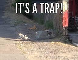 Vet Memes - savma s the vet gazette main more winning memes from life as a