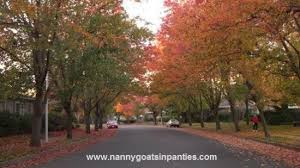 sacramento is the city of trees so quit saying it s