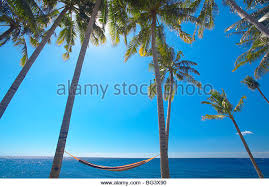 beach view palm trees hammock stock photos u0026 beach view palm trees