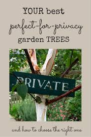 the 8 best perfect for privacy garden trees the middle sized