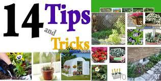 gardening tips 14 simple gardening tips and tricks newsnish