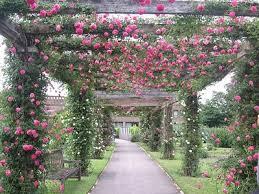 113 best royal botanic gardens kew images on pinterest kew