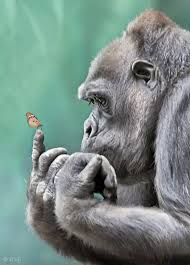 gorilla with butterfly on its finger click image to find more