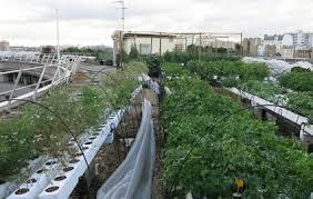 ratp siege une ferme maraîchère pousse sur le toit du local ratp le