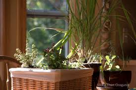 Easy Herbs To Grow Inside by Simple Luxury 5 Easy Ways To Use Herbs This Weekend