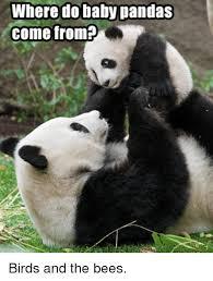 Funny Panda Memes - 25 best memes about baby pandas baby pandas memes