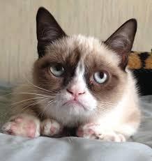 Depressed Cat Meme - depressed cat meme tumblr cat best of the funny meme